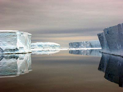 Ricerca polare